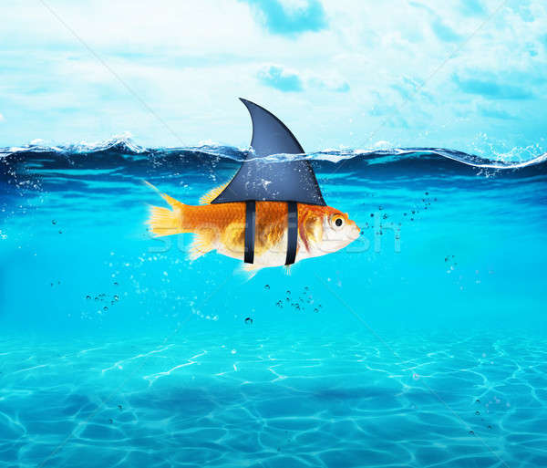 Goldfish acting as shark to terrorize the enemies. Concept of competition and bravery Stock photo © alphaspirit