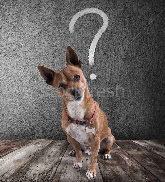 Kutya kérdőjel fej felirat jókedv vicces Stock fotó © alphaspirit