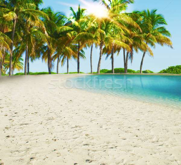 Paradise tropical beach Stock photo © alphaspirit