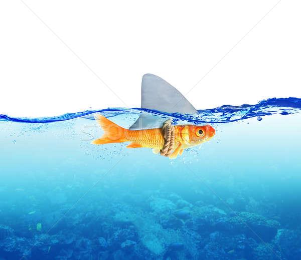красный рыбы акула морем океана власти Сток-фото © alphaspirit