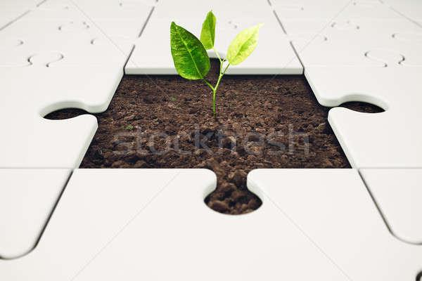 Growth and development through teamwork Stock photo © alphaspirit
