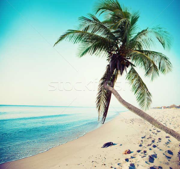 тропический пляж кокосового дерево чистой морем Сток-фото © alphaspirit