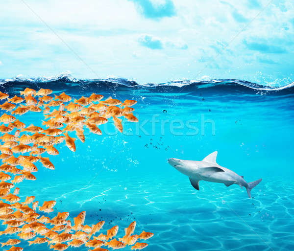 Goldfishes group make a big mouth to eat the shark. Concept of unity is strenght,teamwork and partne Stock photo © alphaspirit