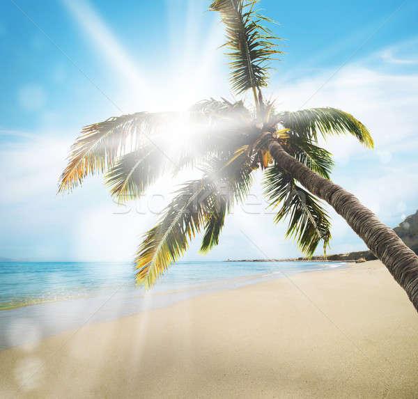 Tropical beach Stock photo © alphaspirit