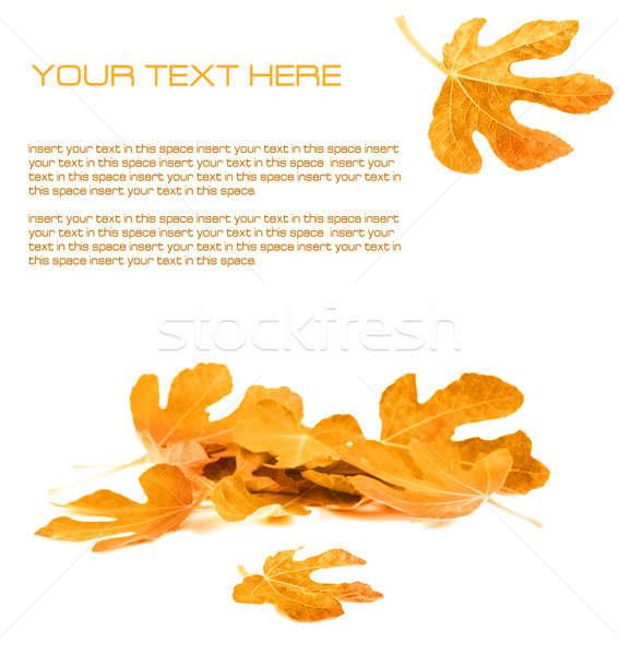 Photo stock: Automne · layout · blanche · espace · texture · nature