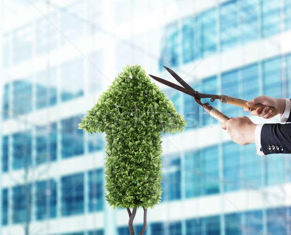 Empresário planta como seta Foto stock © alphaspirit