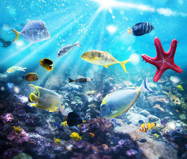 Mariene leven kleurrijk vis vegetatie zon Stockfoto © alphaspirit