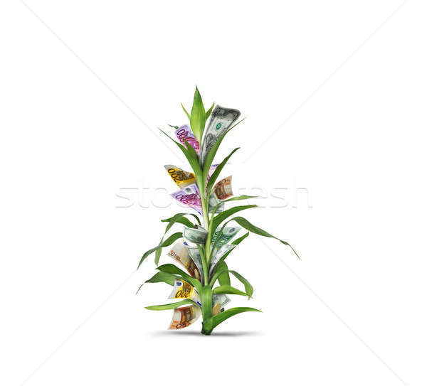 Cultivating investments Stock photo © alphaspirit
