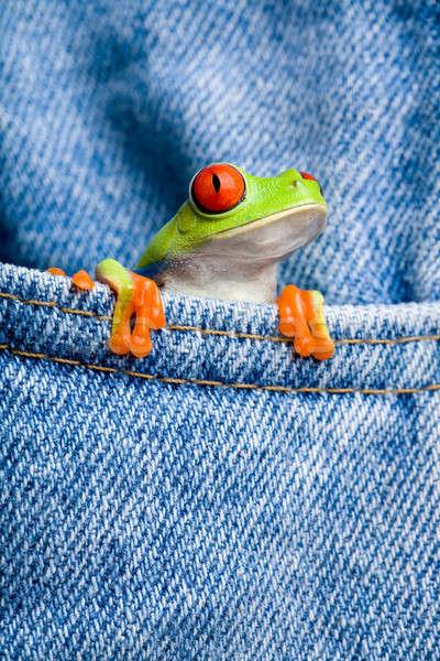 Kurbağa cep kot mavi Stok fotoğraf © alptraum