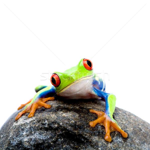 frog on rock Stock photo © alptraum