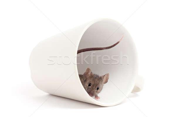 Foto stock: Curioso · ratón · aislado · blanco · fuera · taza · de · café
