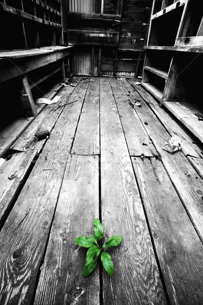 Speranza impianto crepe vecchio piano potere Foto d'archivio © alptraum