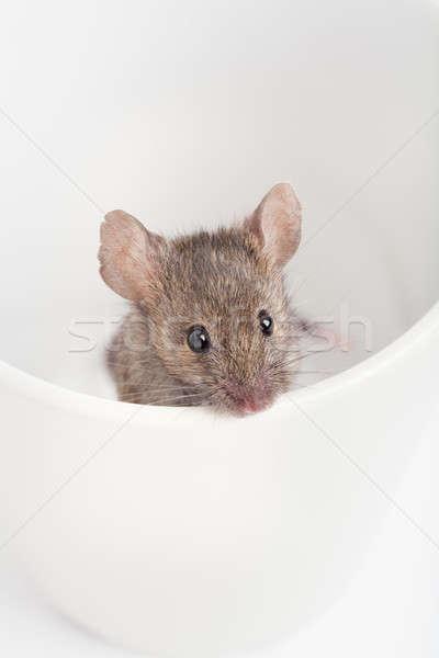 Muis beker naar uit natuur Stockfoto © alptraum