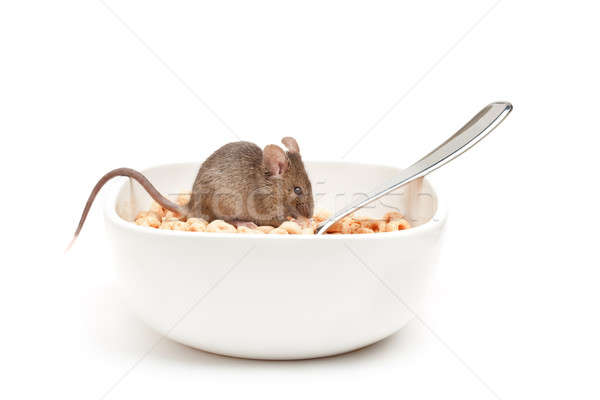 mouse in cereal bowl isolated Stock photo © alptraum