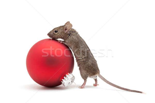 Navidad ratón chuchería aislado mirando rojo Foto stock © alptraum