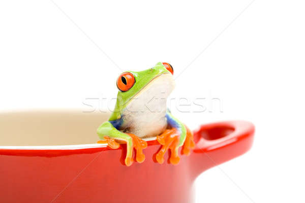 frog looking out of pot Stock photo © alptraum