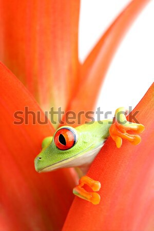 frog in cooking pot isolated on white Stock photo © alptraum