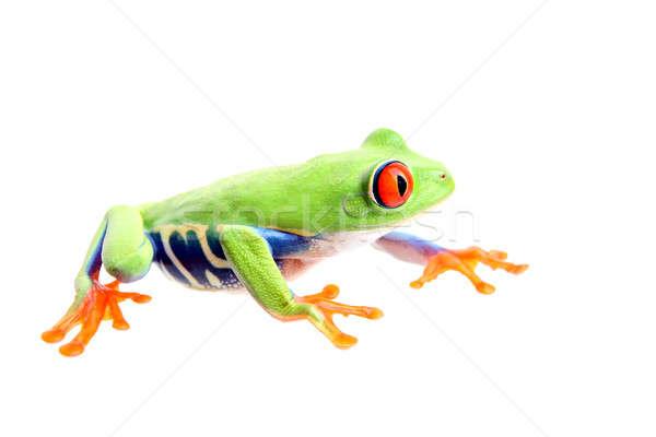 frog isolated on white Stock photo © alptraum