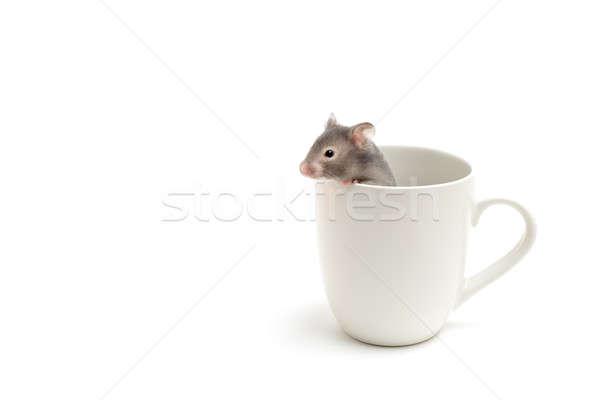 Kaméleon csésze izolált néz ki fehér Stock fotó © alptraum