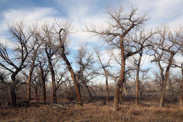 Toter Baum Landschaft spät Sonne ländlichen Wyoming Stock foto © alptraum