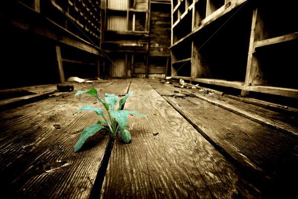Foto stock: Esperança · jovem · planta · rachaduras · velho · piso