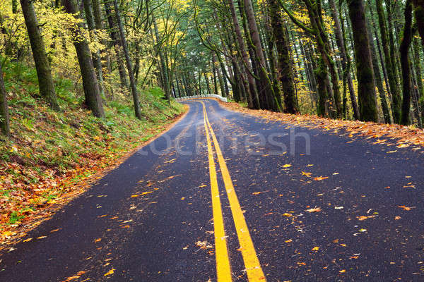 Stock photo: fall winding forest mountain road