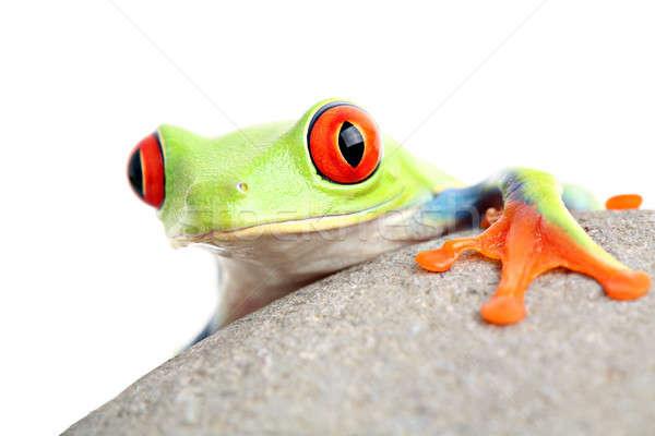 Kurbağa kaya yalıtılmış beyaz turuncu Stok fotoğraf © alptraum