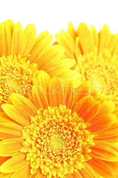flowers background Stock photo © alptraum