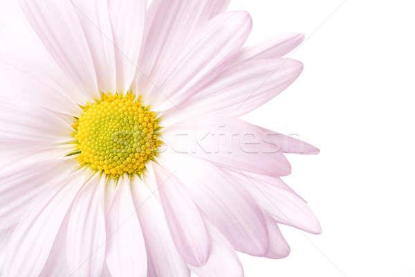 Stock photo: daisy high-key isolated