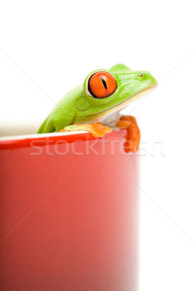 frog looking out of cooking pot Stock photo © alptraum