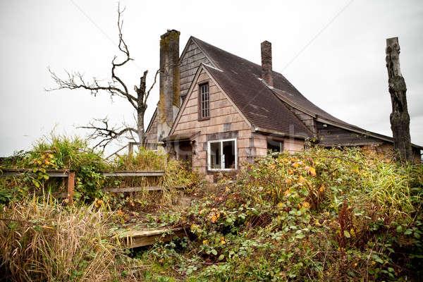 Opuszczony domu wiejski domu drzewo charakter Zdjęcia stock © alptraum