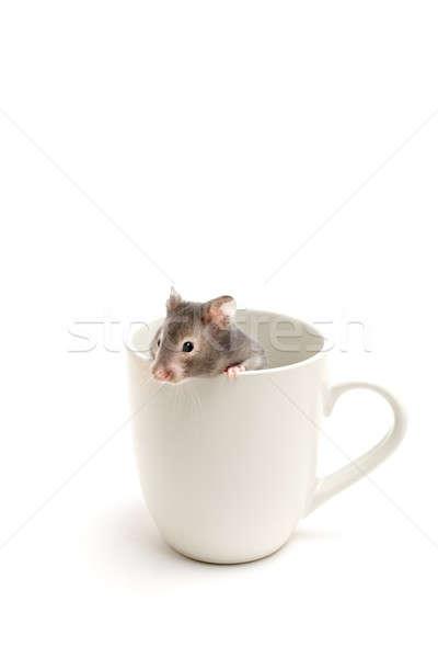 hamster in hiding Stock photo © alptraum