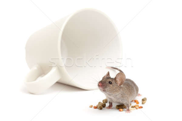 mouse cup and food isolated Stock photo © alptraum