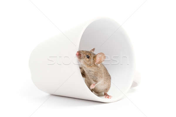 mouse in a cup isolated on white Stock photo © alptraum