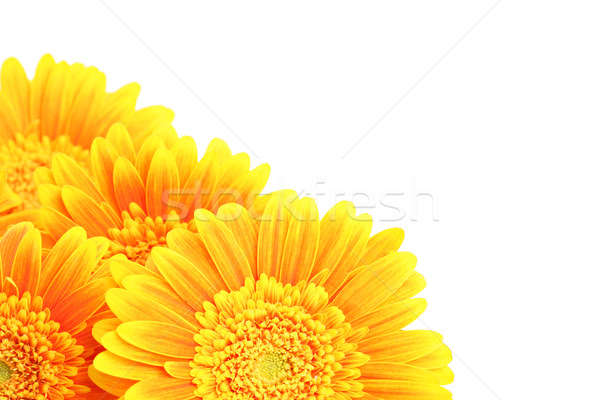 flowers corner isolated Stock photo © alptraum