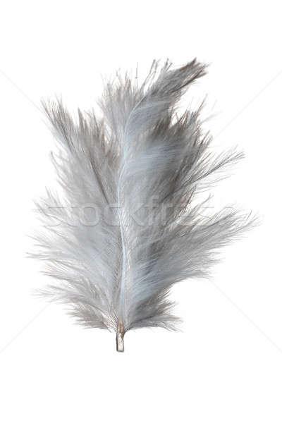 Blanco pluma aislado luz aire peso Foto stock © Alsos
