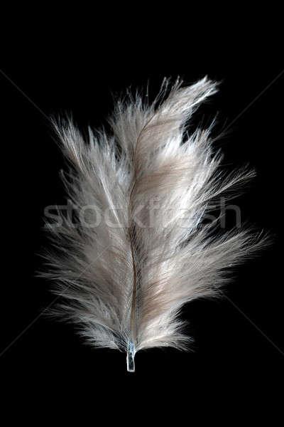 Beyaz tüy yalıtılmış siyah ışık hava Stok fotoğraf © Alsos