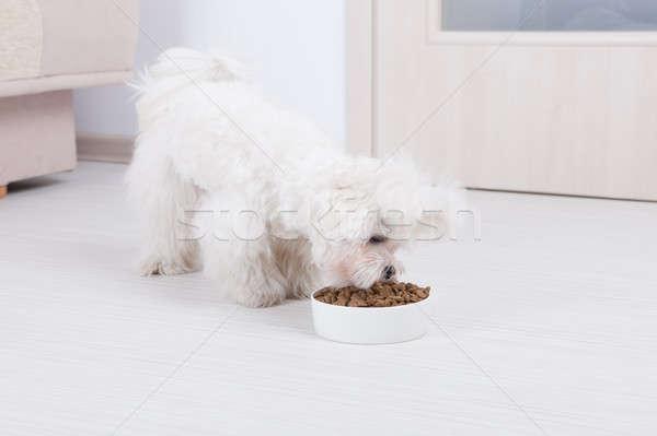 Сток-фото: собака · еды · высушите · продовольствие · мало · чаши
