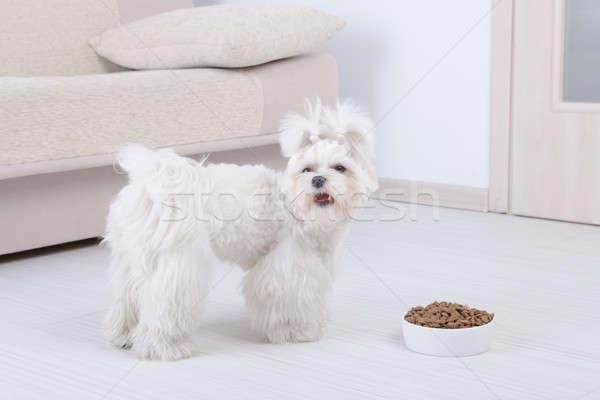 Cão secar comida pequeno tigela casa Foto stock © Amaviael