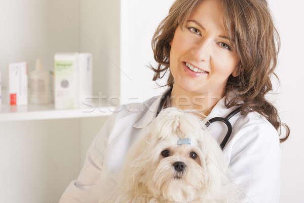 Foto stock: Mulher · veterinário · cão · bela · mulher · veterinário