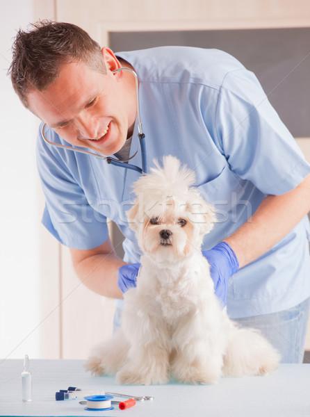 Veterinario perro sonriendo hombre médico Foto stock © Amaviael