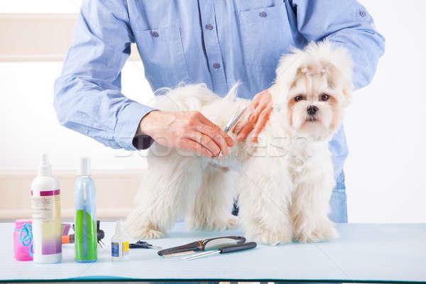 Dog grooming Stock photo © Amaviael
