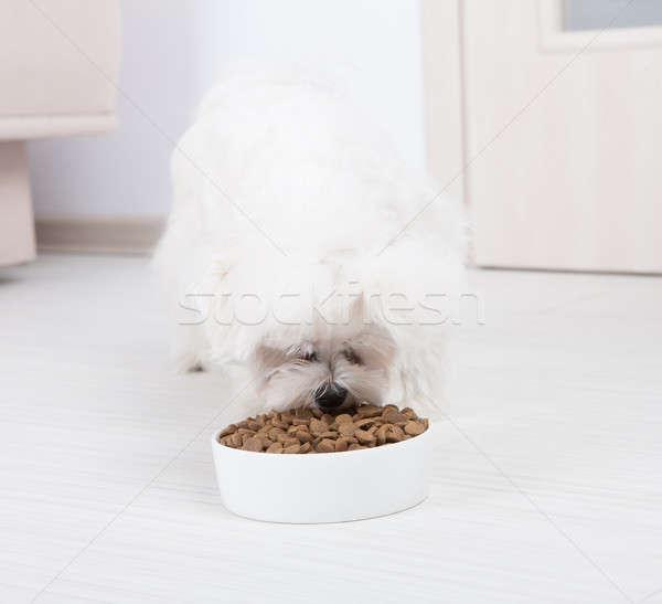 Dog eating dry food Stock photo © Amaviael