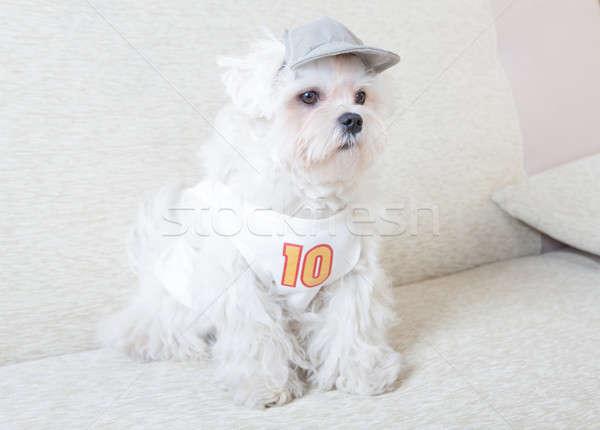 Cute mullido jóvenes CAP camiseta Foto stock © Amaviael