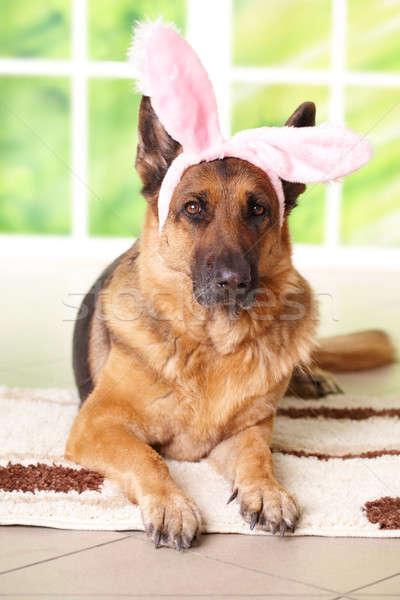 イースターバニー · 犬 · 面白い · 頭 · 動物 · コンセプト