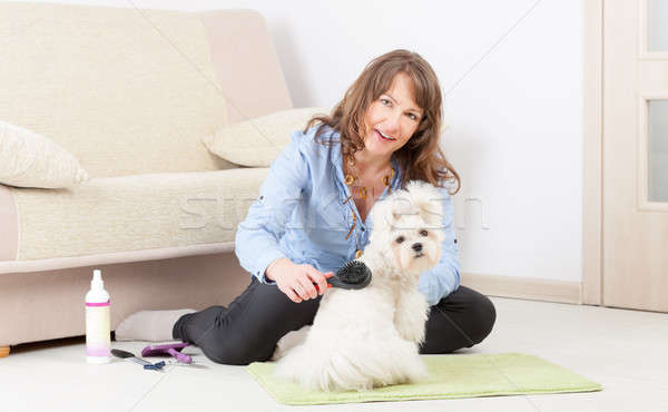 Dog grooming at home Stock photo © Amaviael