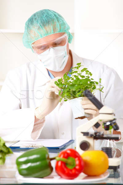 Researcher holding up a GMO vegetable in the laboratory Stock photo © Amaviael