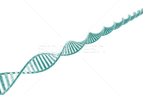 DNA strand Stock photo © Amaviael