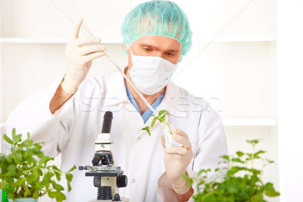 Stock photo: Researcher holding up a GMO plant in the laboratory