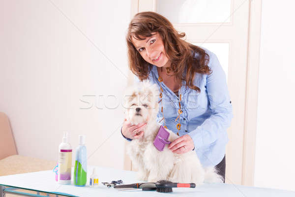 Dog grooming Stock photo © Amaviael